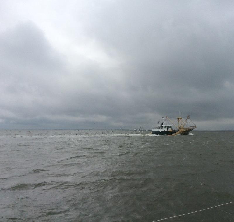 Fischer auf der Waddenzee